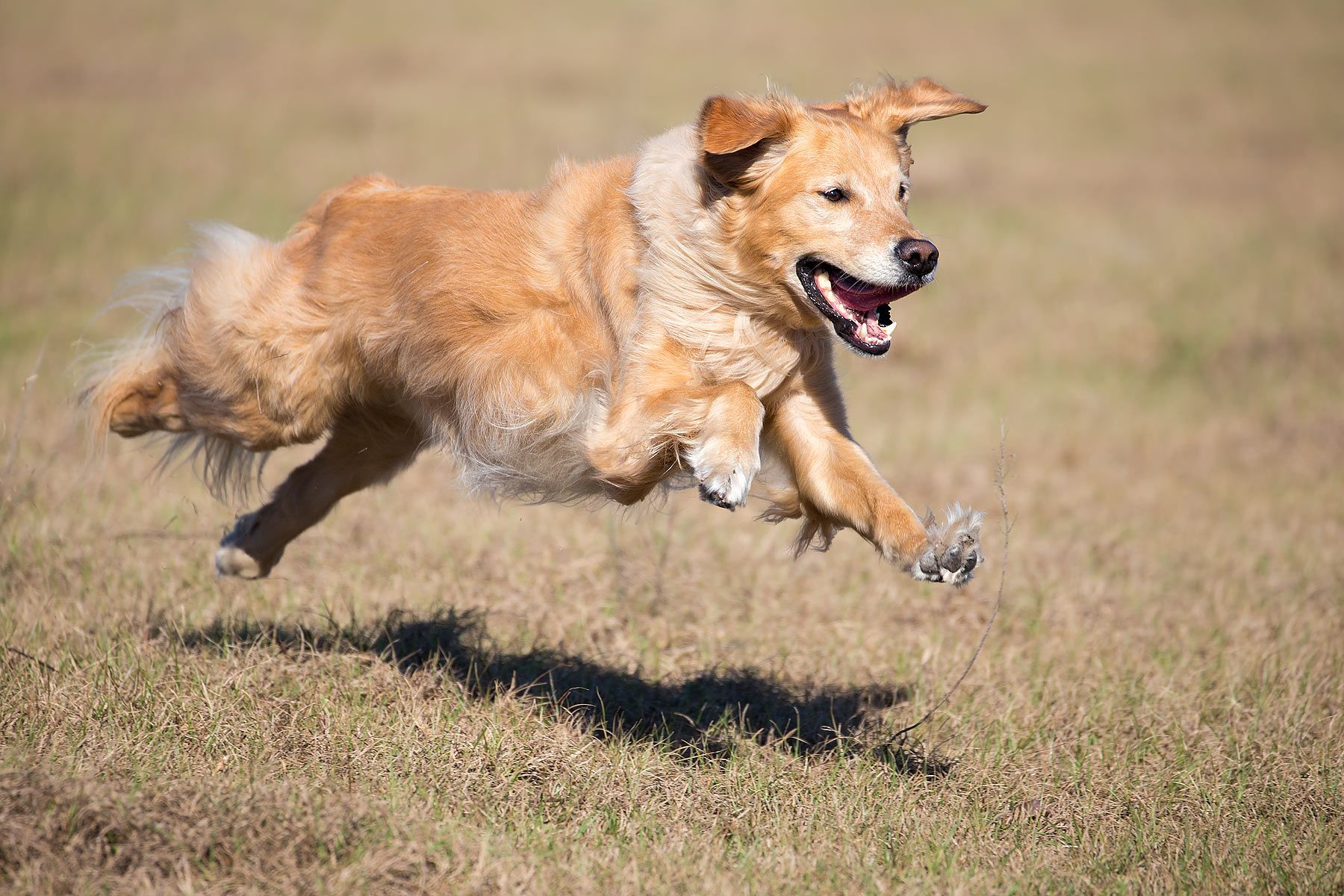 Jake-running-with-all-feet-in-the-air_B8R7330-Montverde,-FL,-USA.jpg