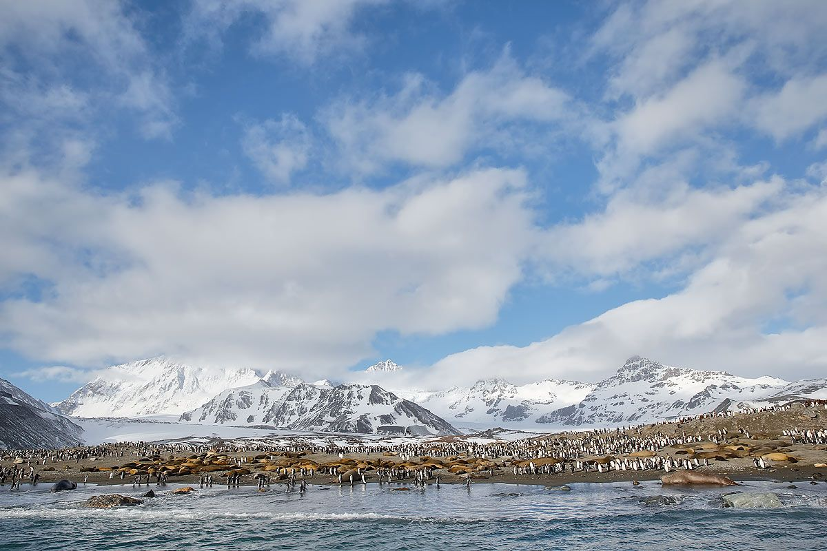 wildlife-at-st-andrews-bay-overview_e7t2511-st-andrews-bay-entrance-south-georgia-islands-southern-ocean.jpg