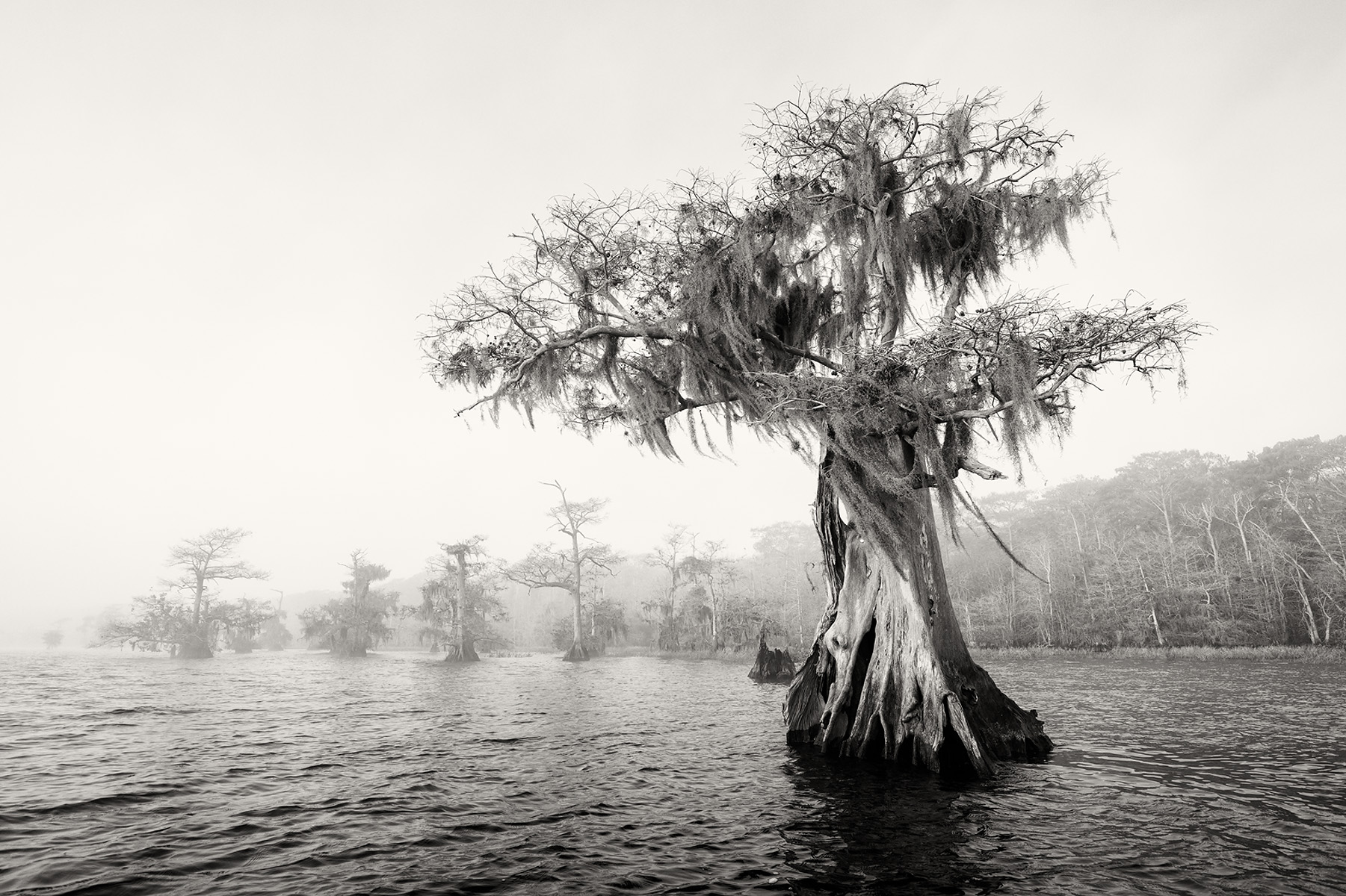 Cypress tree in the lake_B&W_S6A0160-Lake Blue Cypress, FL, USA.jpg