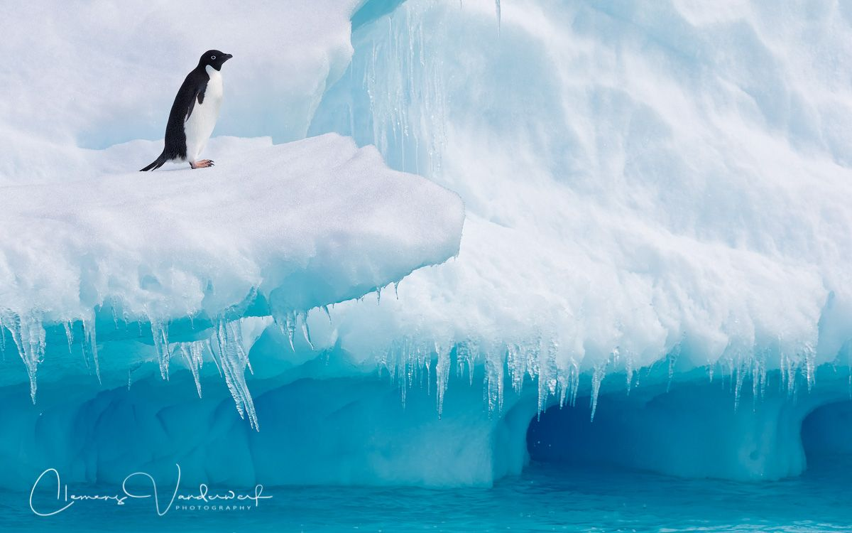 adelie-penguin-on-iceberg-ledge-with-blue-ice-and-water_e7t1711-detaille-lsland-antarctica.jpg