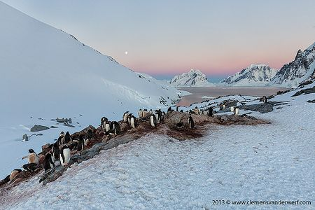 Gentoo-penguin-colony-and-Lamaire-entrance_S6A0026-Petermann-Island-Antarctica.jpg