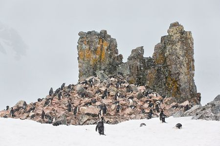 Chinstrap-penguins-together-at-colorful-rocks_E7T0316-Half-Moon-Island-Antarctica.jpg