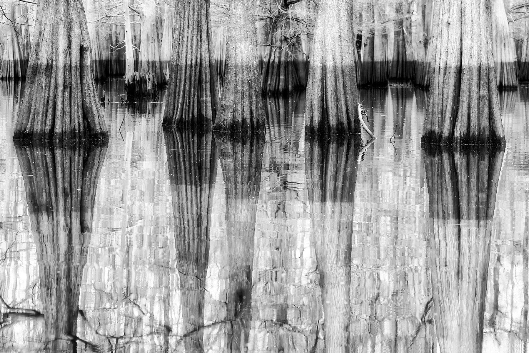 Cypress tree reflections_B&W II_A3I2565-Atchafalaya Basin, LA, USA.jpg