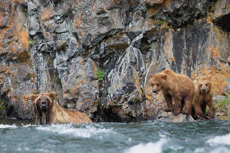 Coastal-brown-bear-and-cubs-fishing_44A3542-Alagnak-River,-Katmai-National-Park-&-Preserve,-AK,-USA.JPG