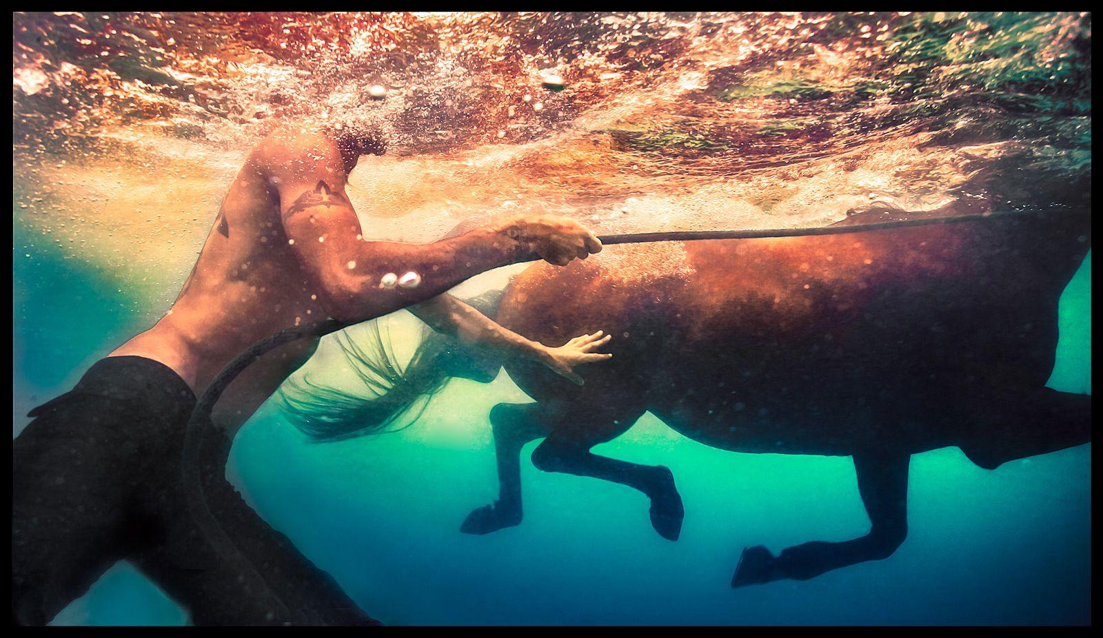 1swimming_horse_3