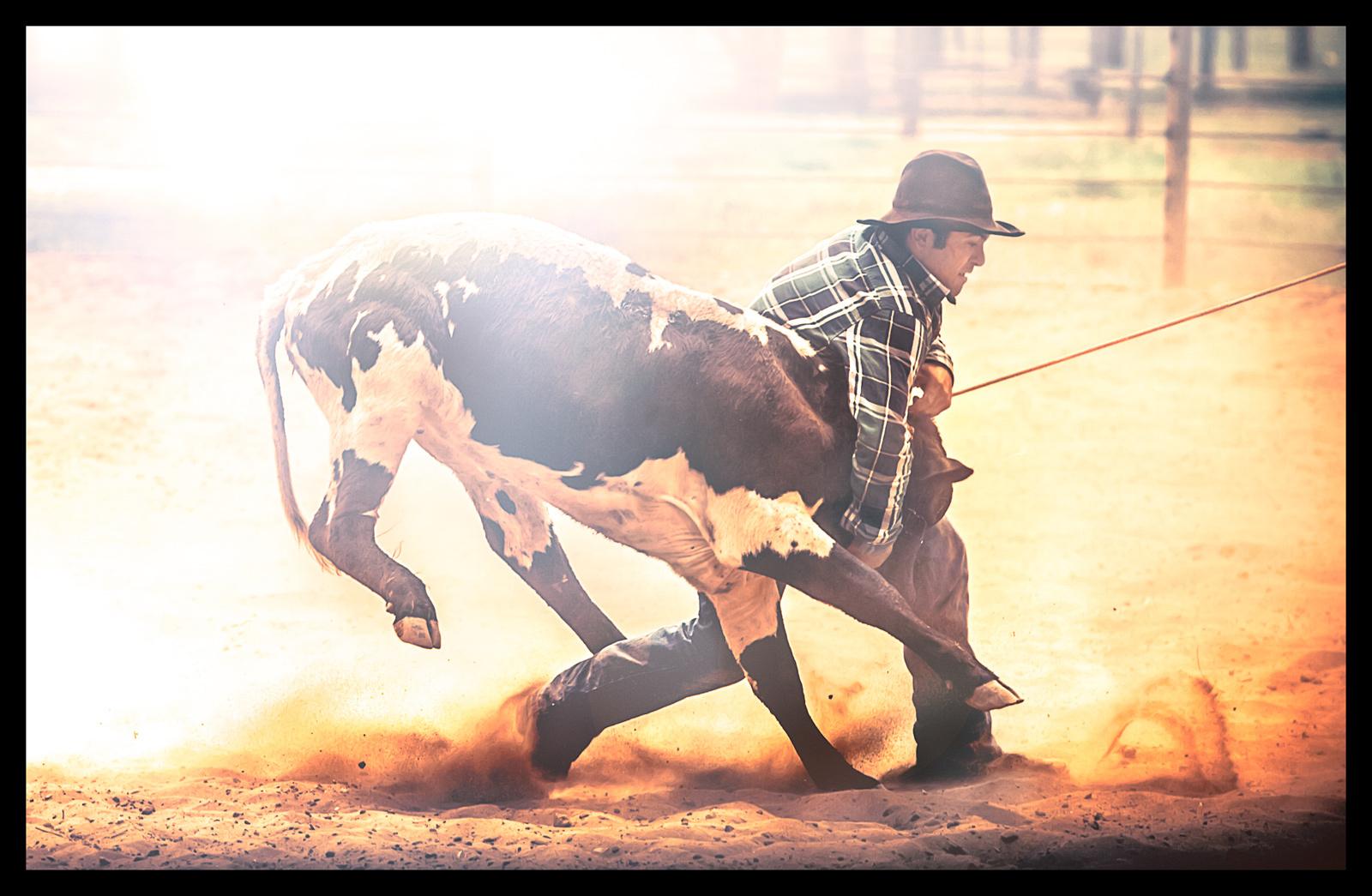 1hawaiian_cowboy_1