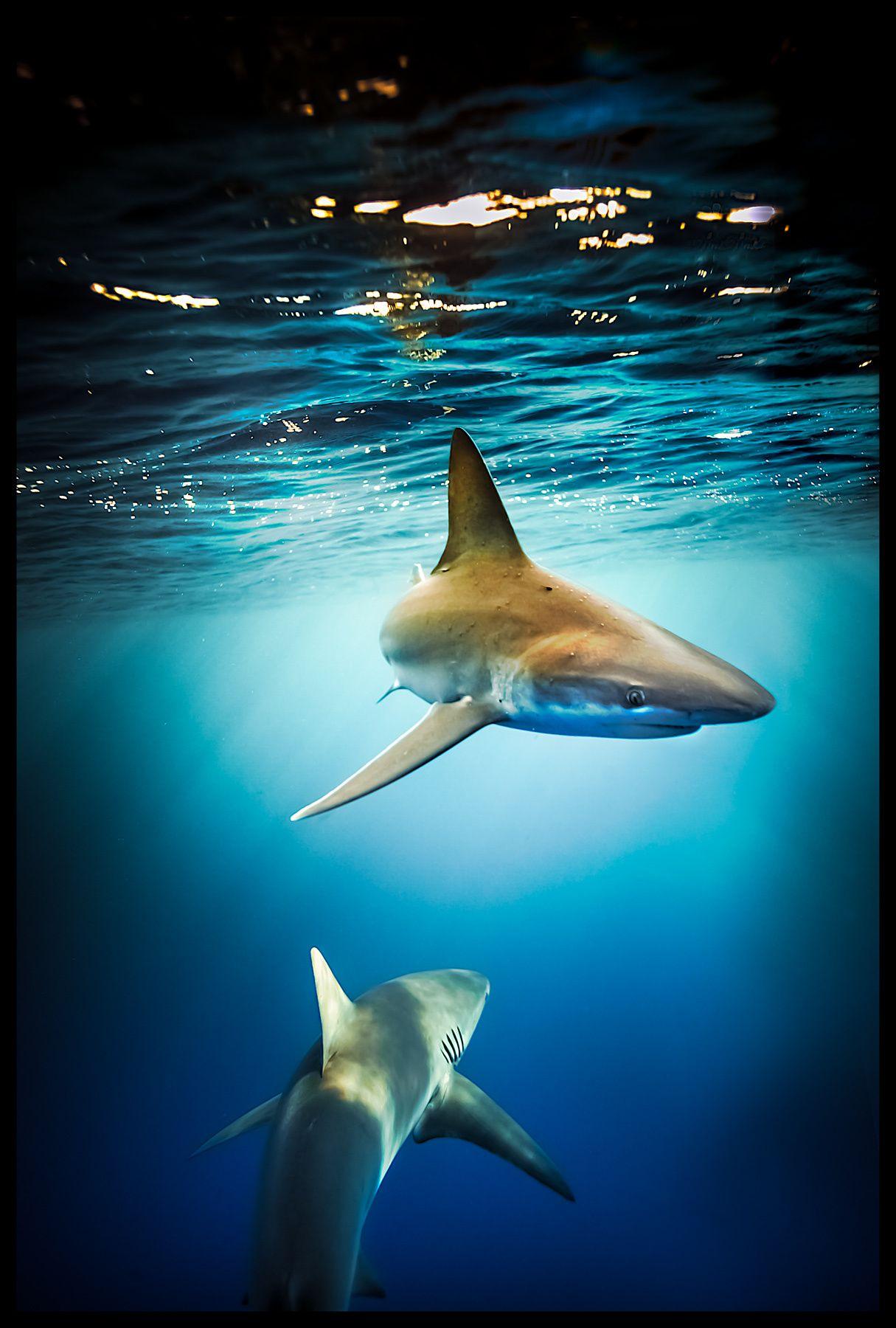 Sharkbait