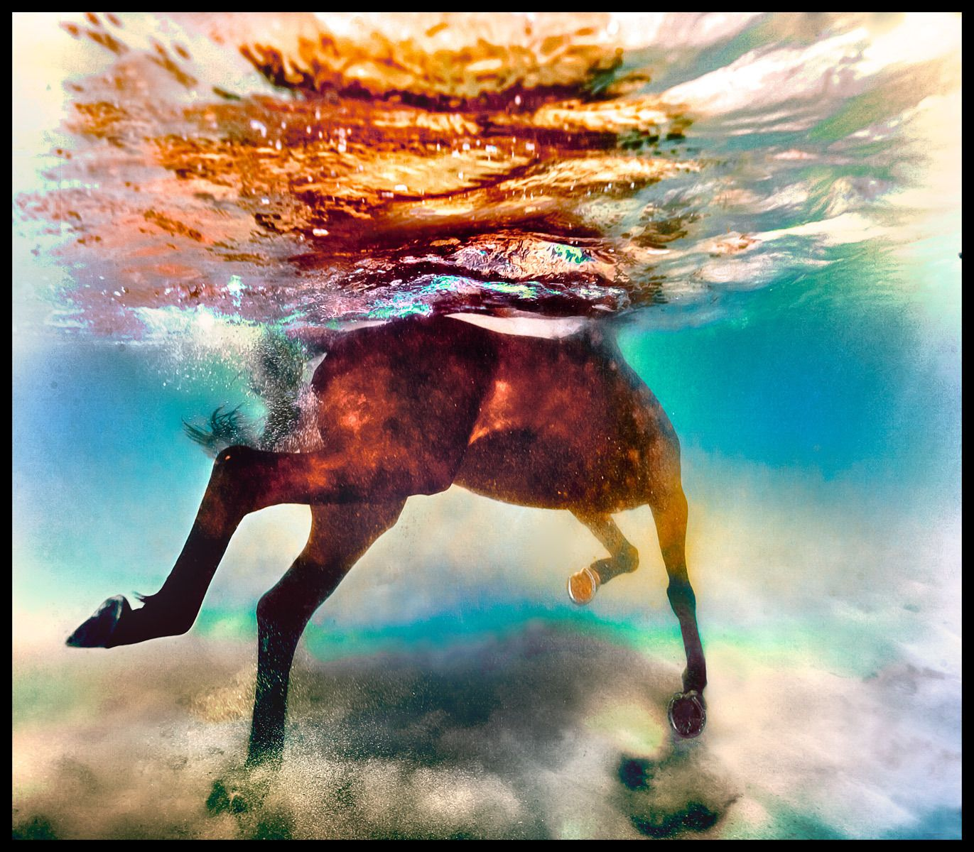 1water_horse