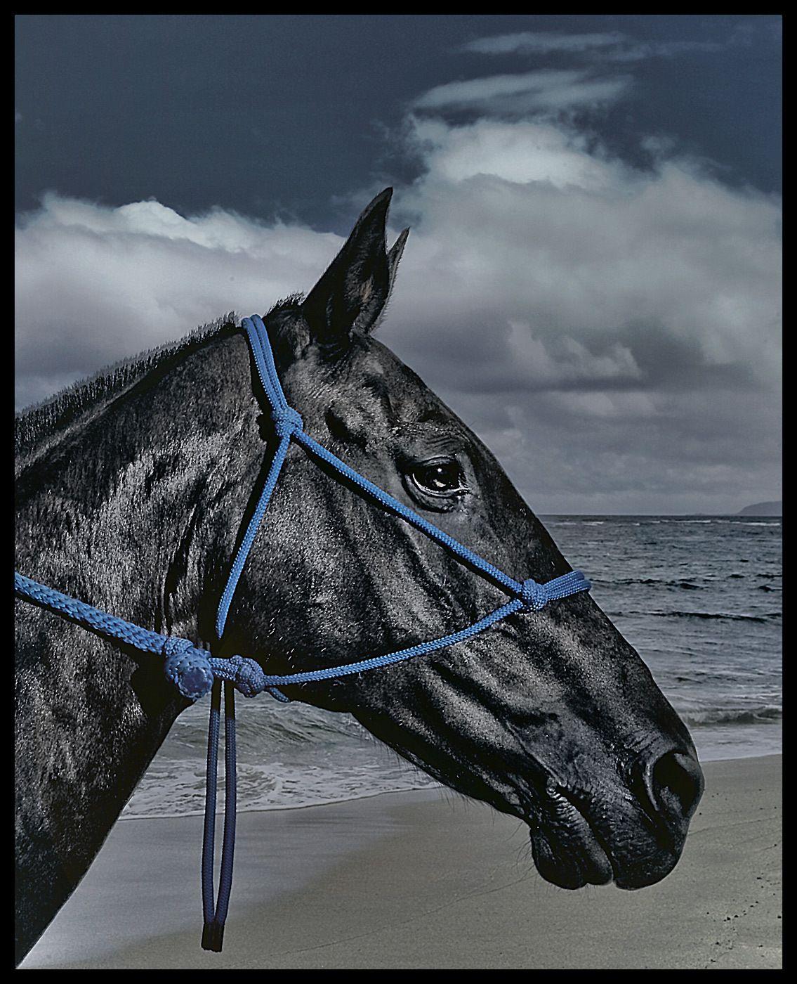 1beach_horse