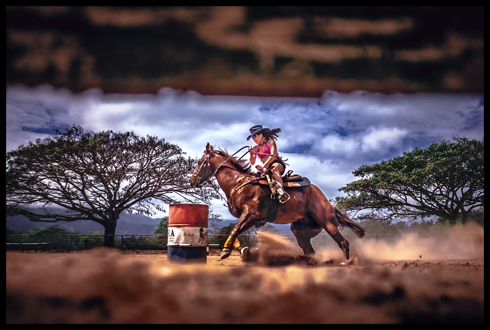 1bikini_horse_1