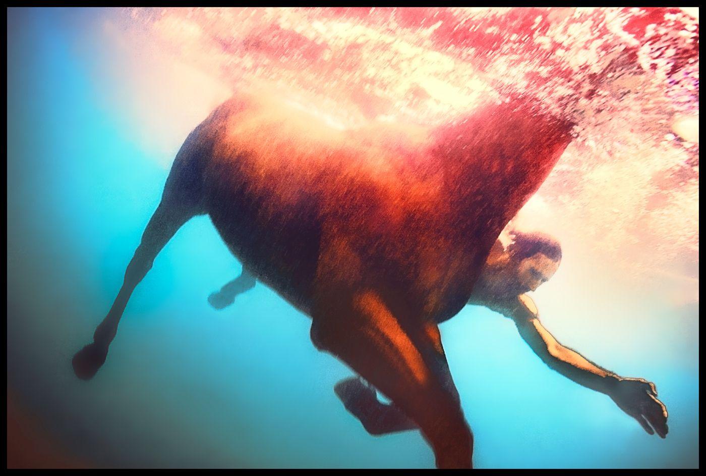 1swimming_horse_1
