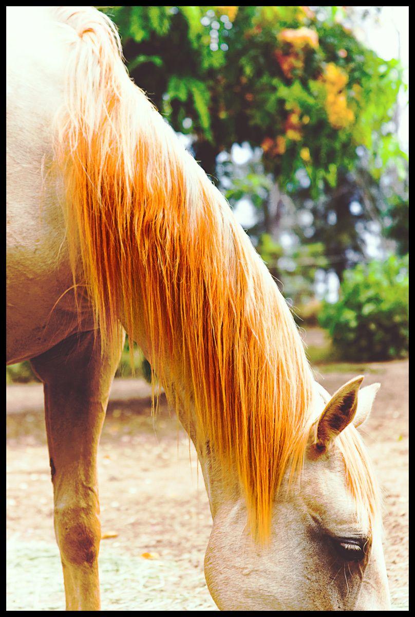 1orange_mane_horse