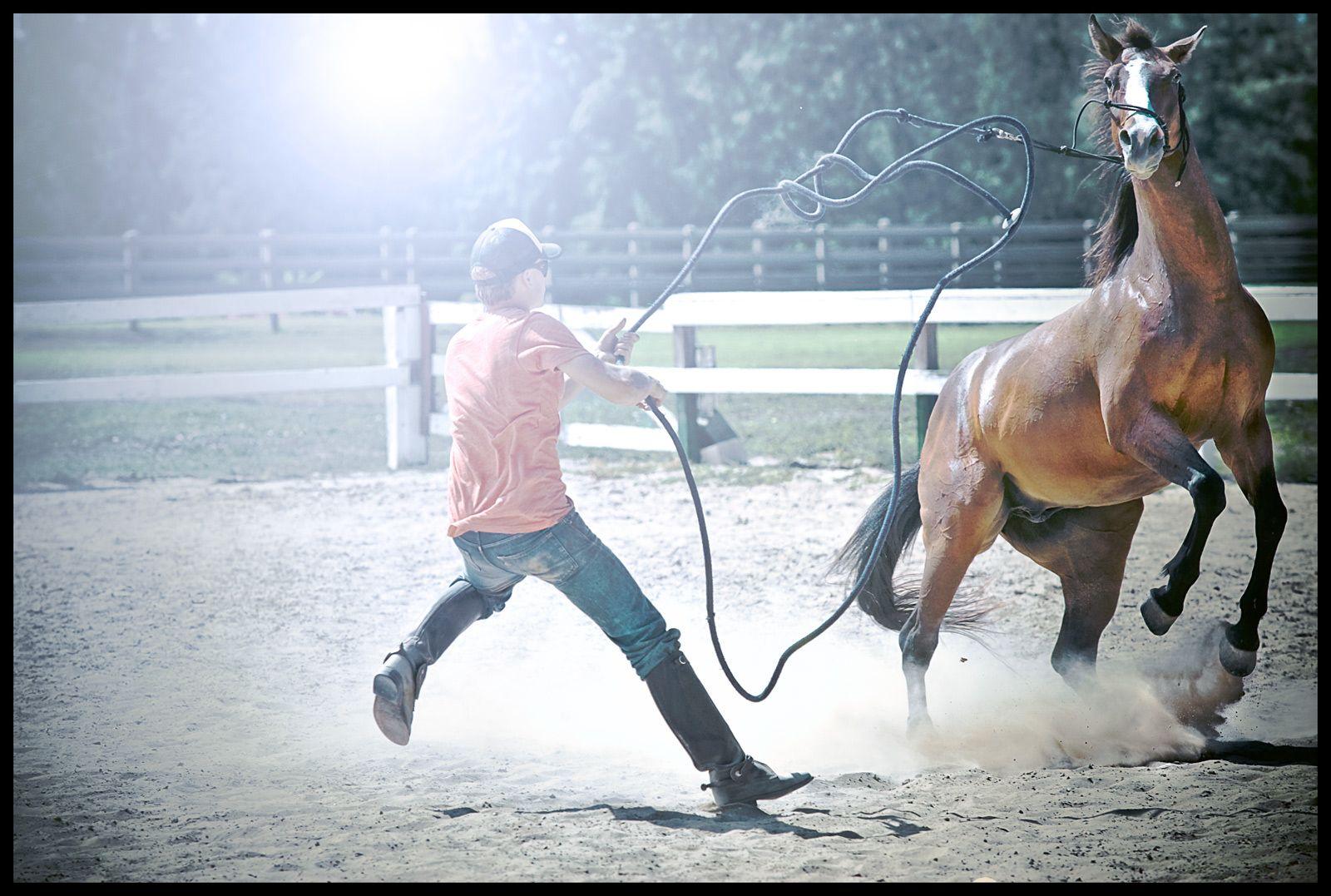 1hawaii_horse_trainer