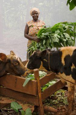 Ziriya Musibika (age 50 ) raises bulls and chickens.