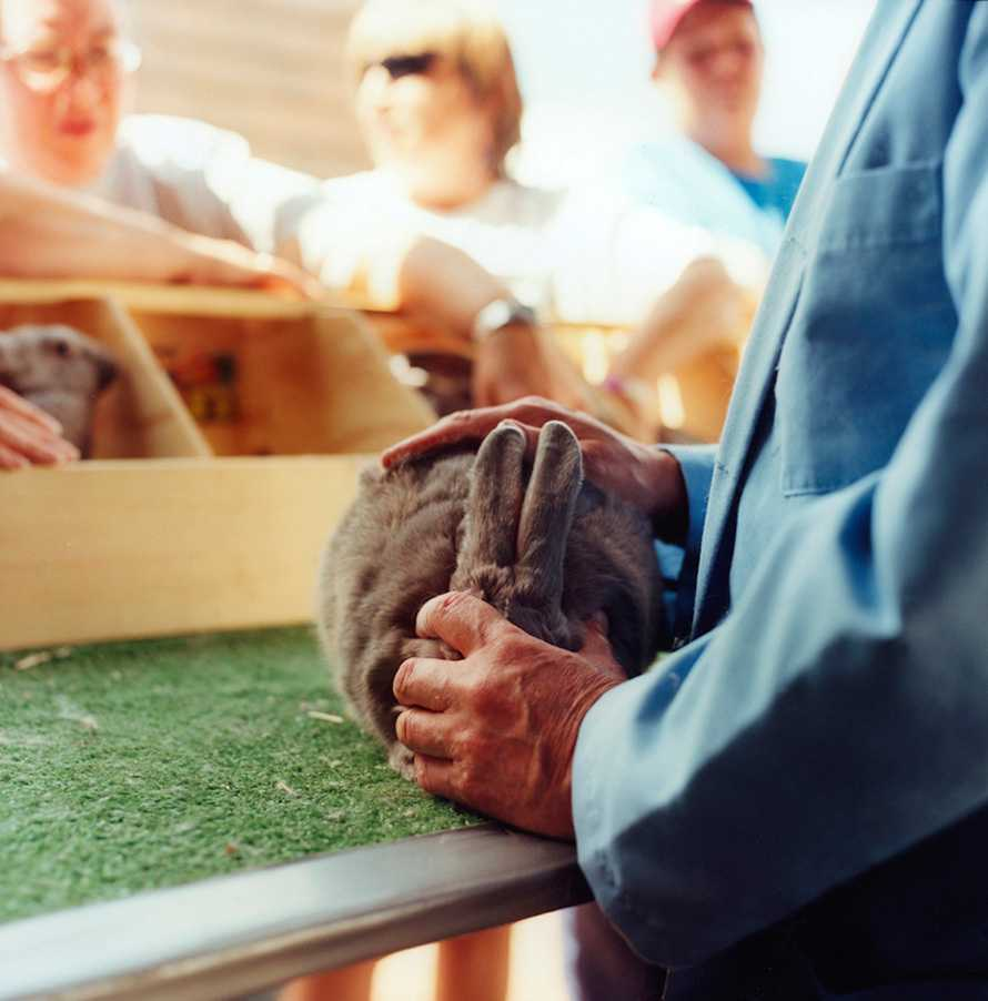 """Rabbit Judging"" Delaware County Fair 2005"