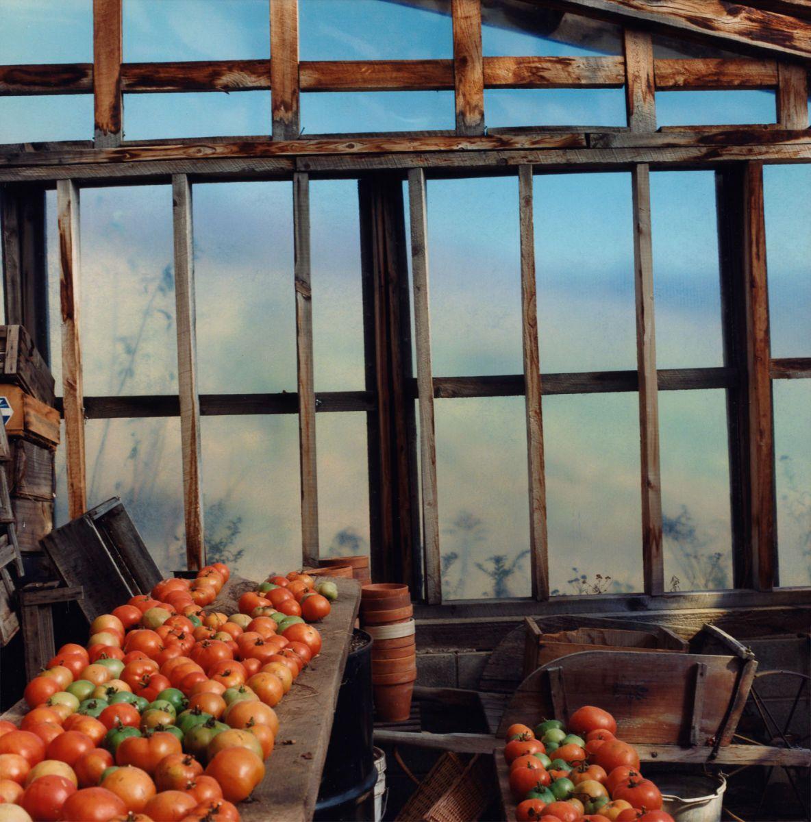 Margaretville, New York tomatoes