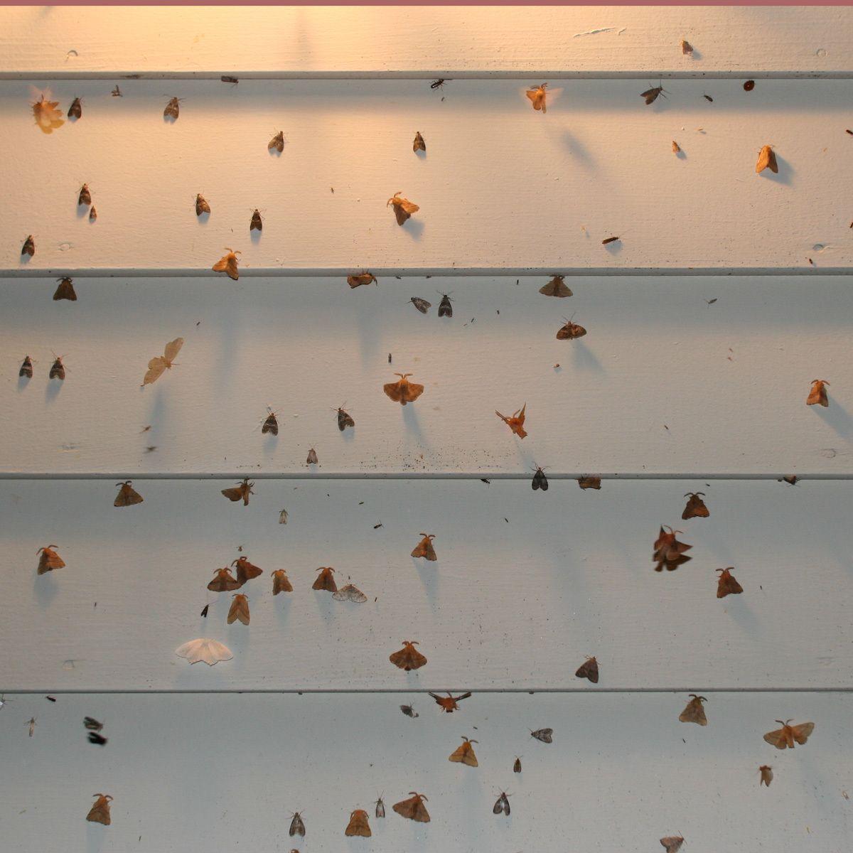 Camp DNA, New York moths