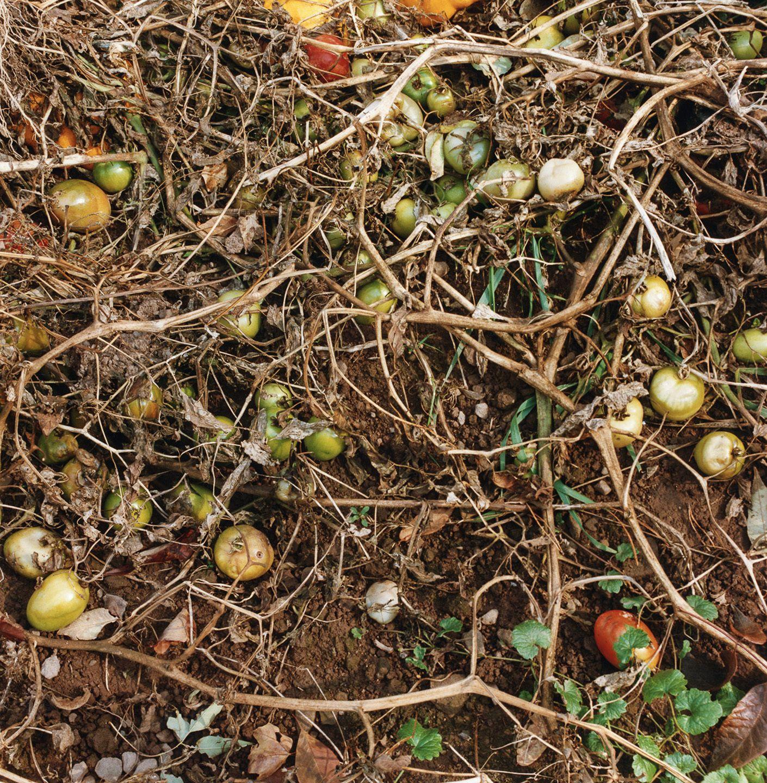 Margaretville, New York harvest