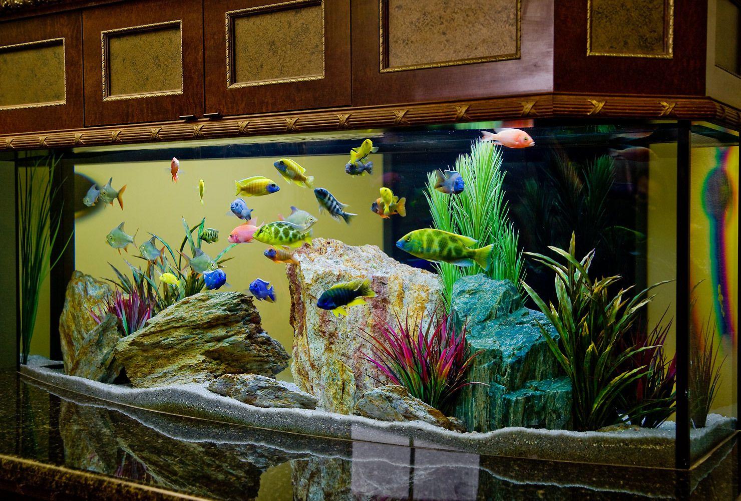 A Vibrant, Colrful Freshwater Aquarium Scene