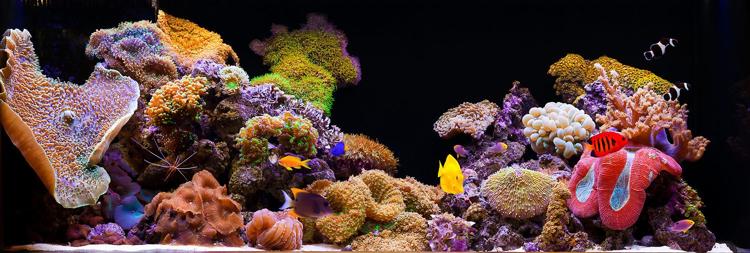 A Medium-Sized Soft Coral Reef Aquarium