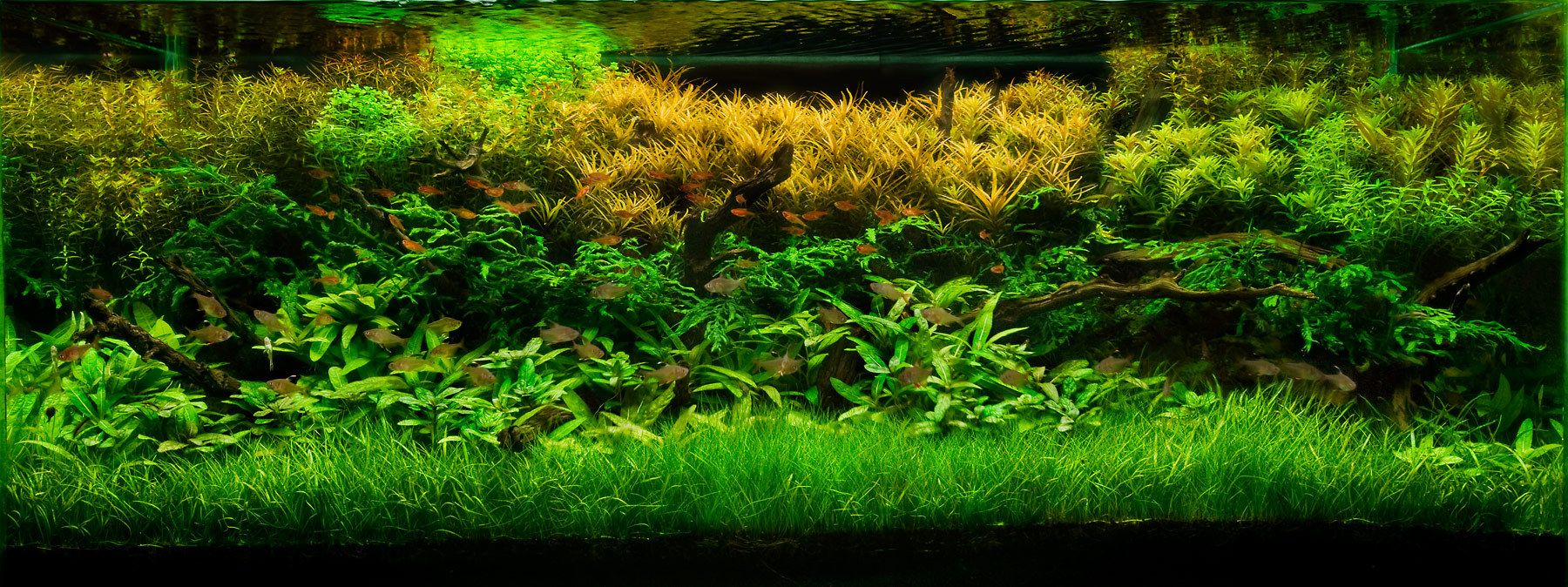 A Layout with Lush Stemmed Aquatic Plants