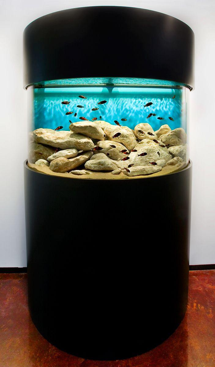 A Half-Cylinder Tropheus Hardscape