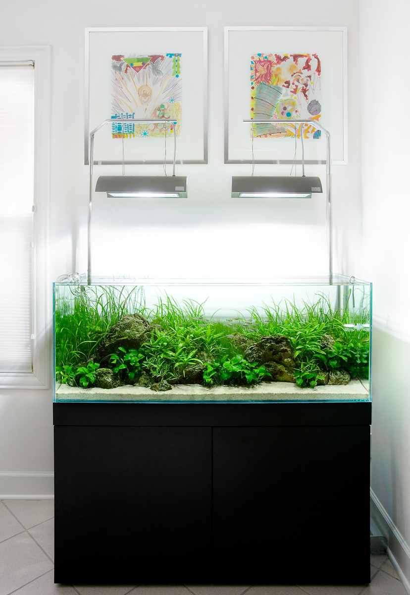 Outstanding Best Home Aquarium Designs Image Collection - Home ...