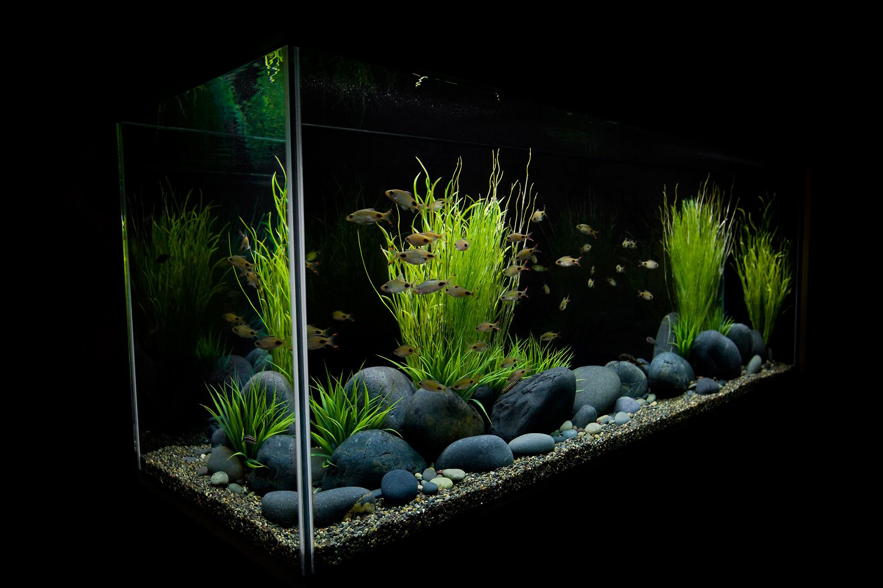 Freshwater Aquarium in a Modern Interior (aquarium detail)