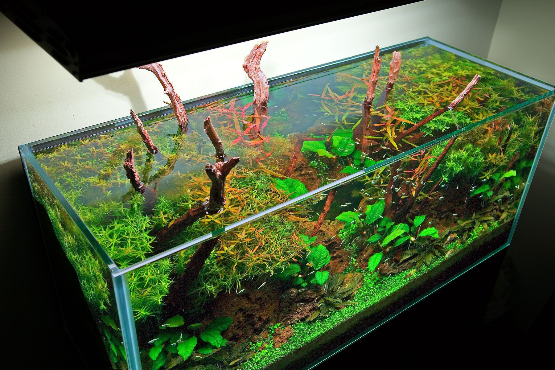 An Open Top Aquarium View from Above