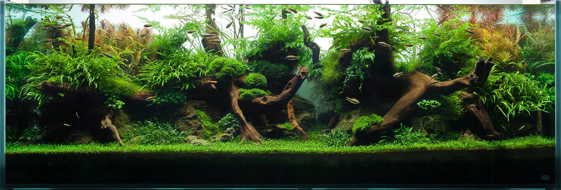 An Aquascape of Highlight and Shadow
