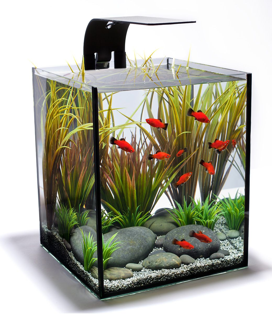 An Aquascape Philosophy for a Desktop Aquarium