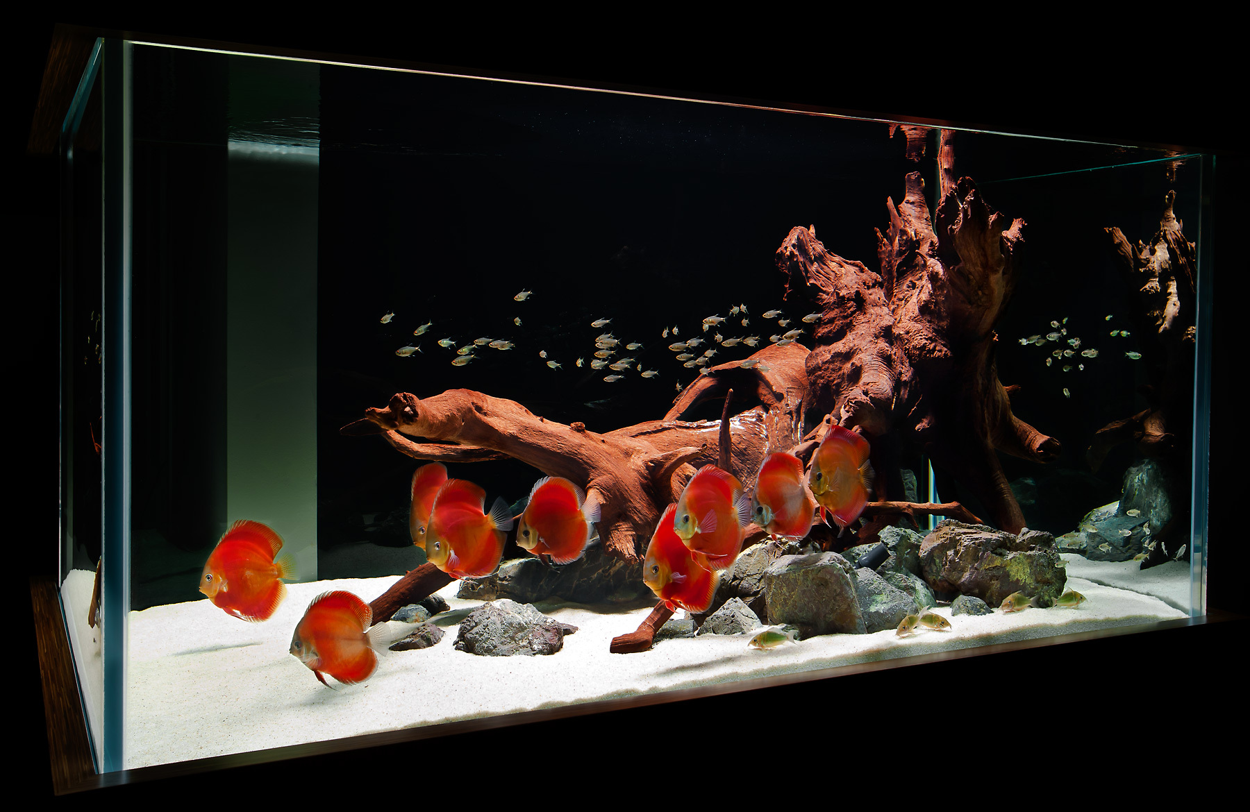 ... Themed Aquascape; Red Discus Hardscape ...