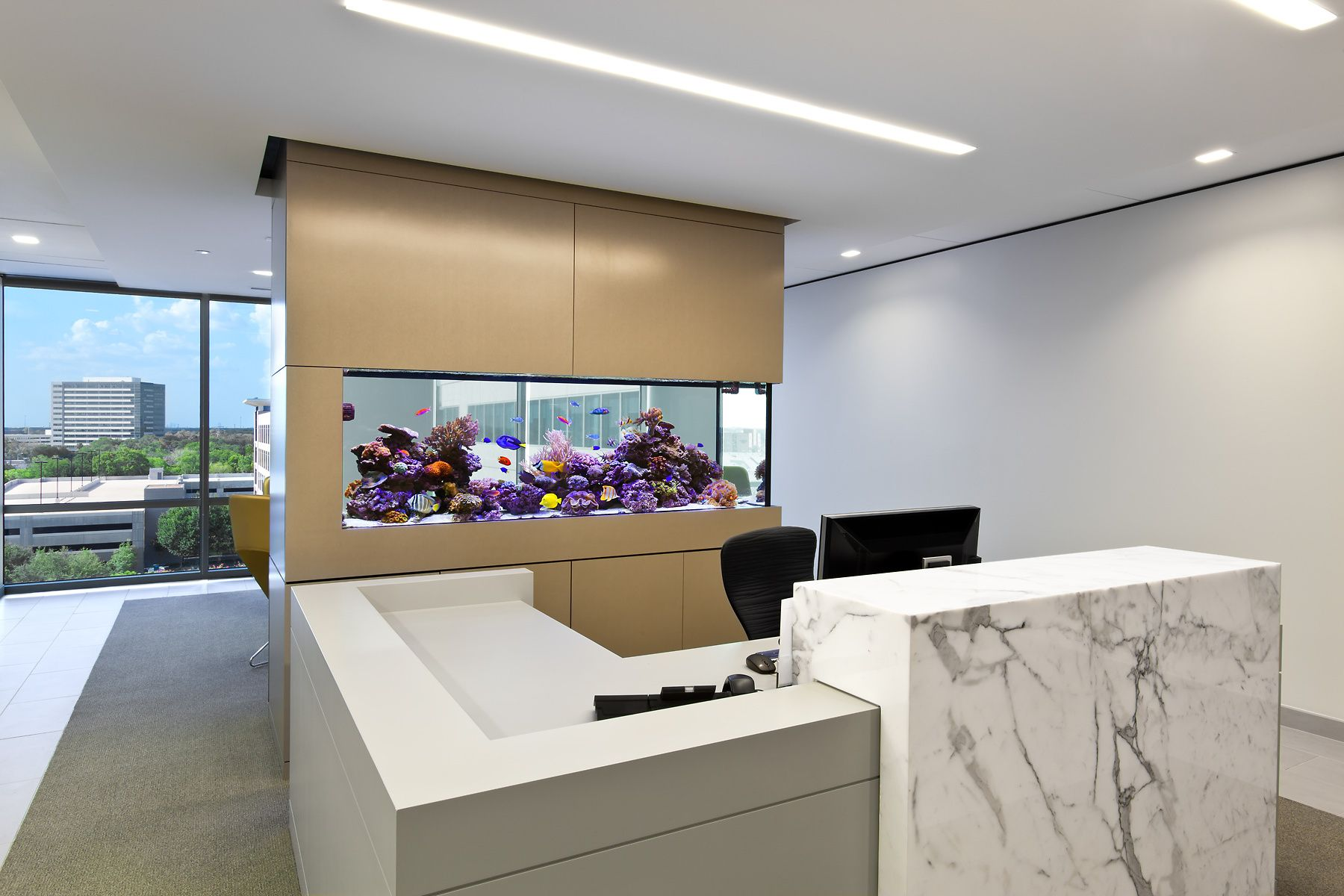 A Custom Reef Aquarium in a Commercial Space
