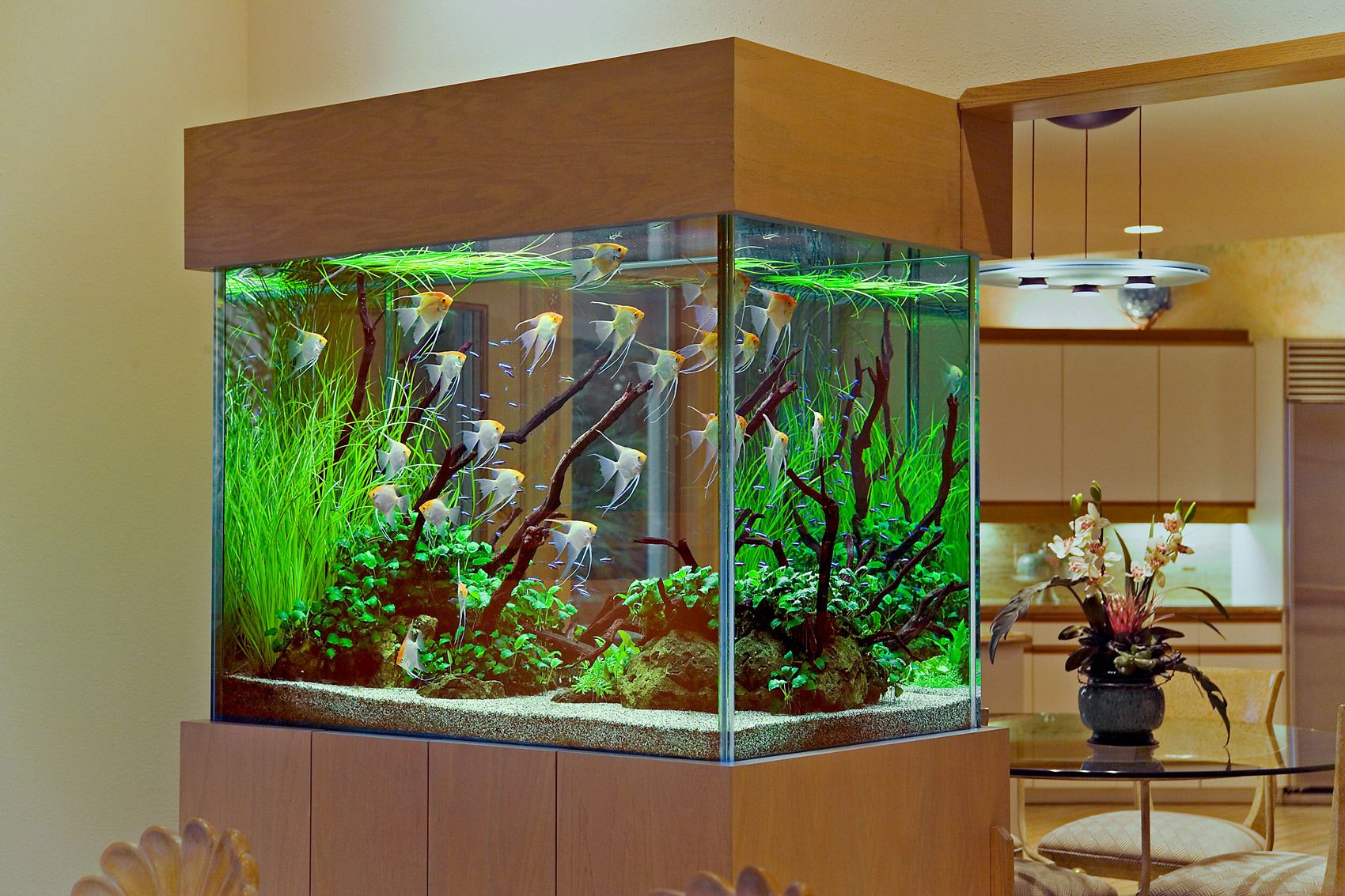 An Angelfish Live Planted Aquarium and Interior