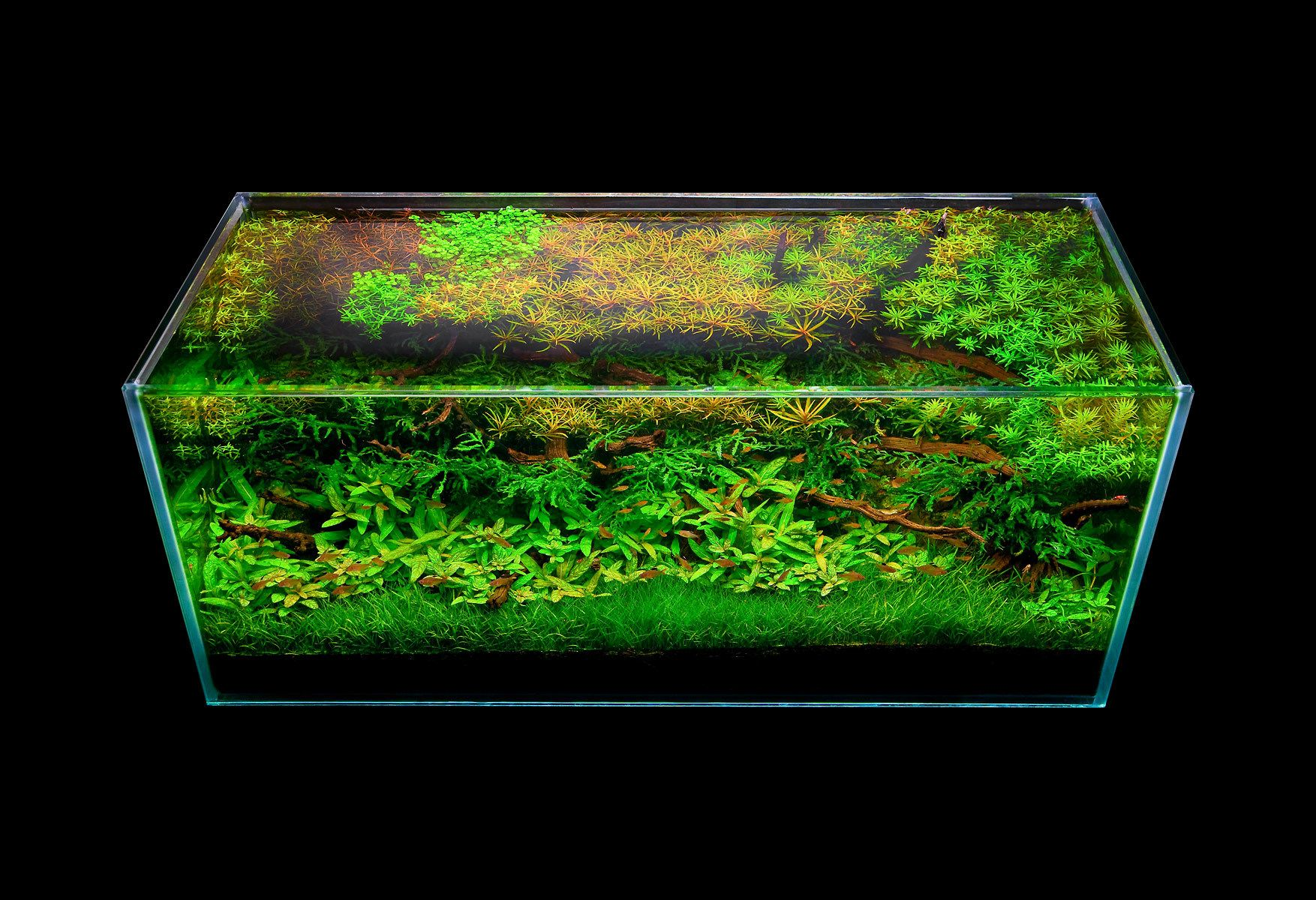 An Open Top Aquascape View