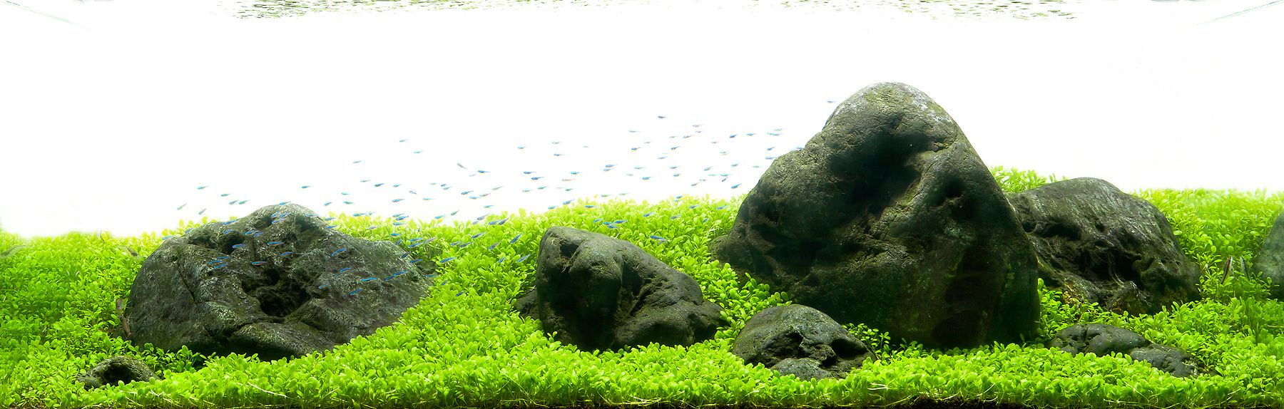 An Aquascape using Hakkai Stones