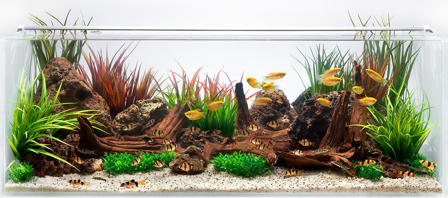 An Aquascape for Gold Gourami