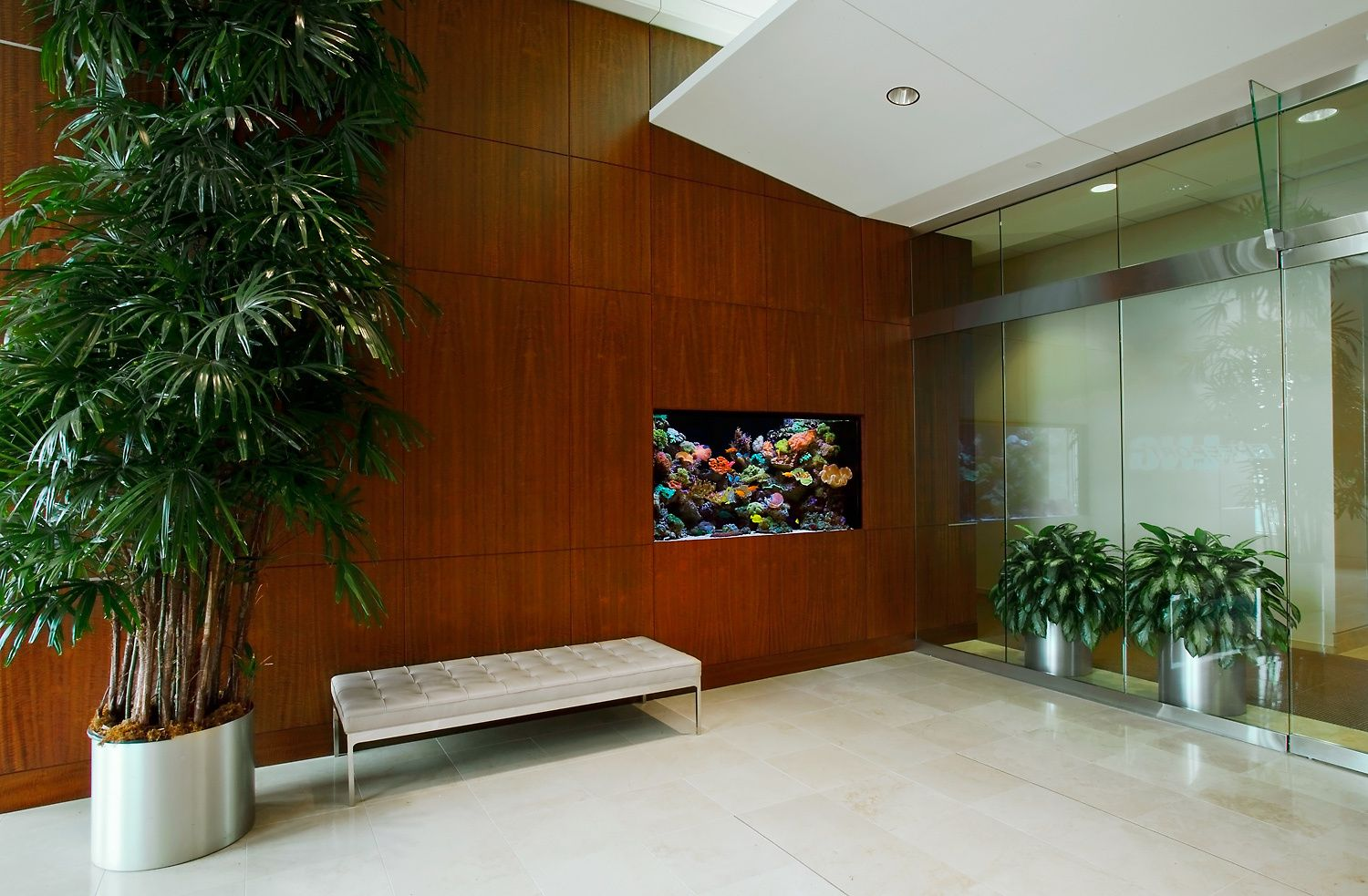 Live Coral Reef Aquarium in a Corporate Reception Space