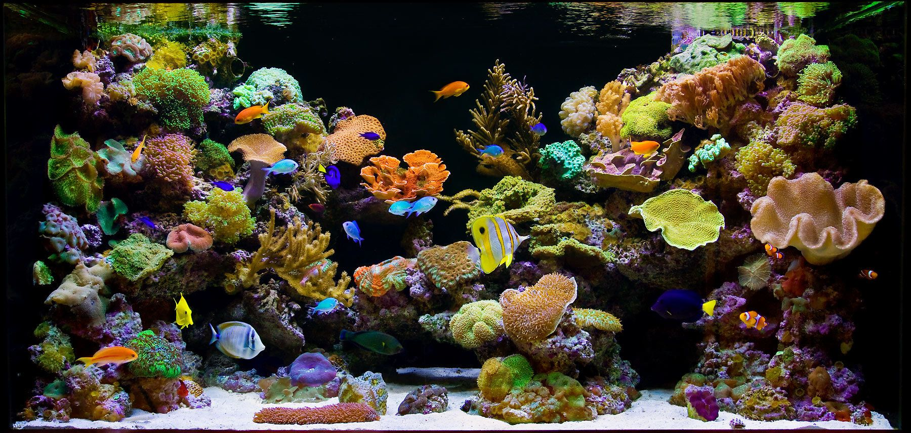 A Splendid Reef Aquarium Scene