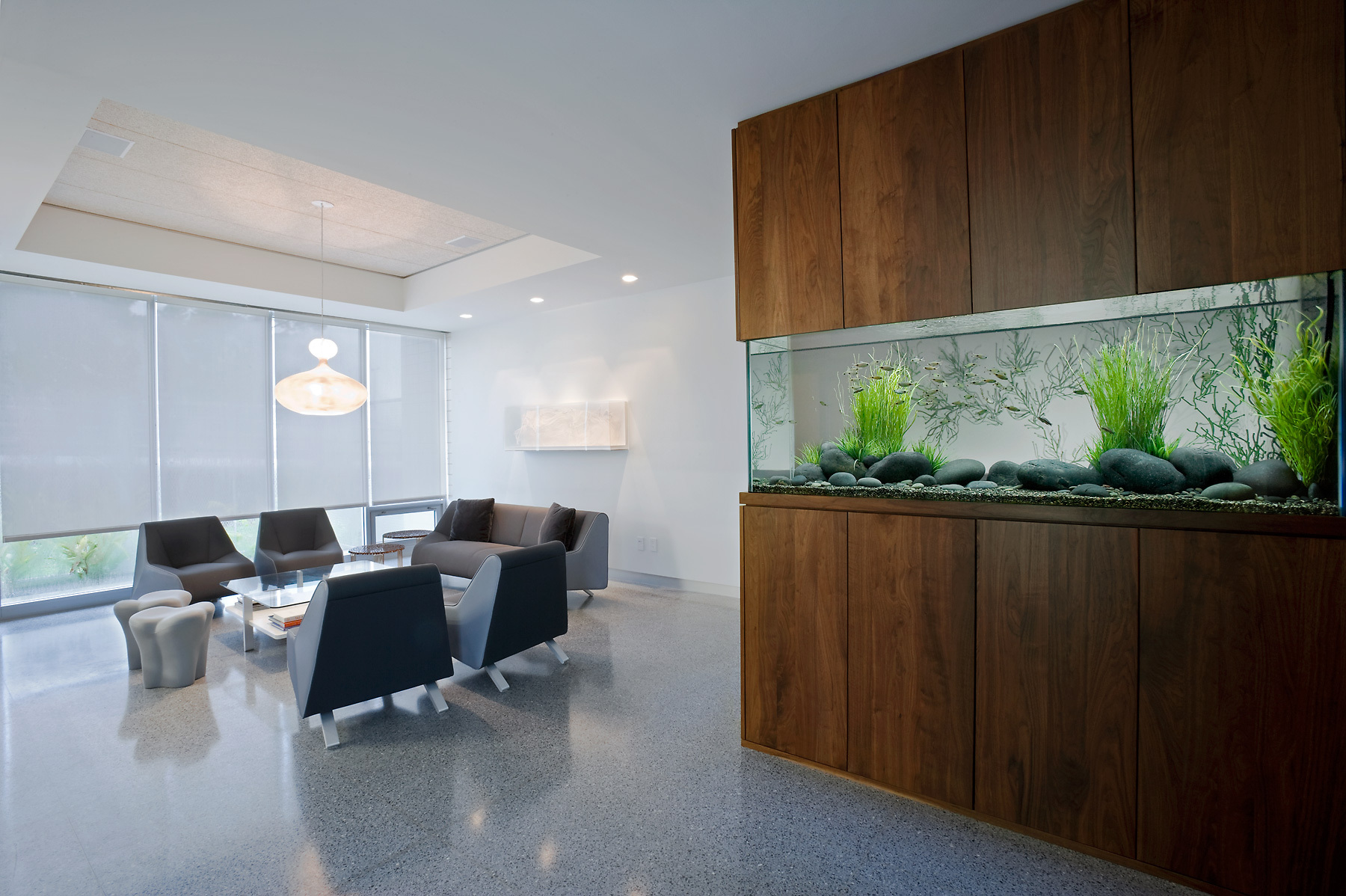 Freshwater Aquarium in a Modern Interior