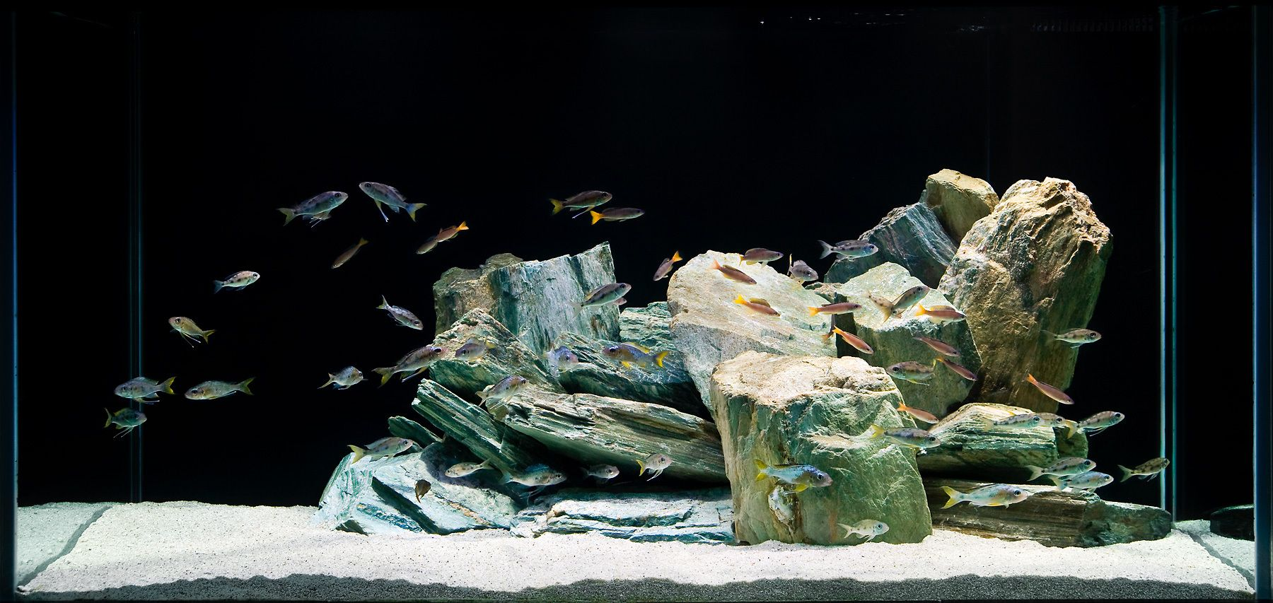 An Aquascape for Ventralis and Friends