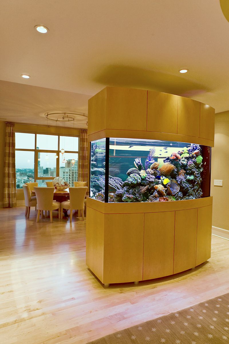 An Island-Style Live Coral Reef Aquarium Installation