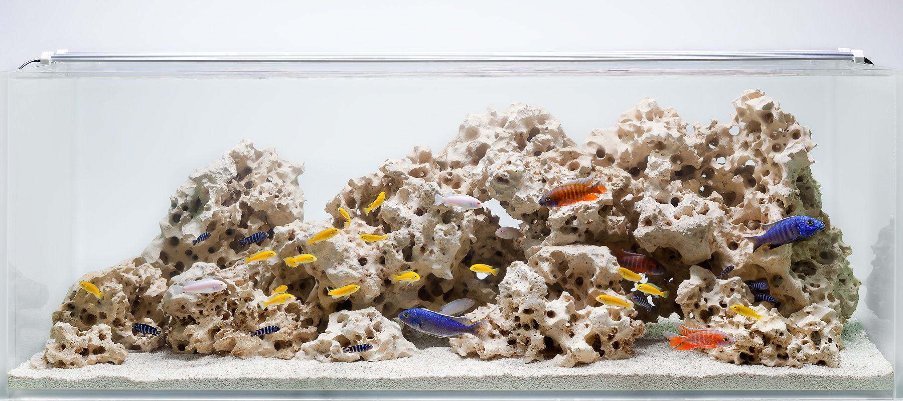 A Classic African Cichlid Hardscape