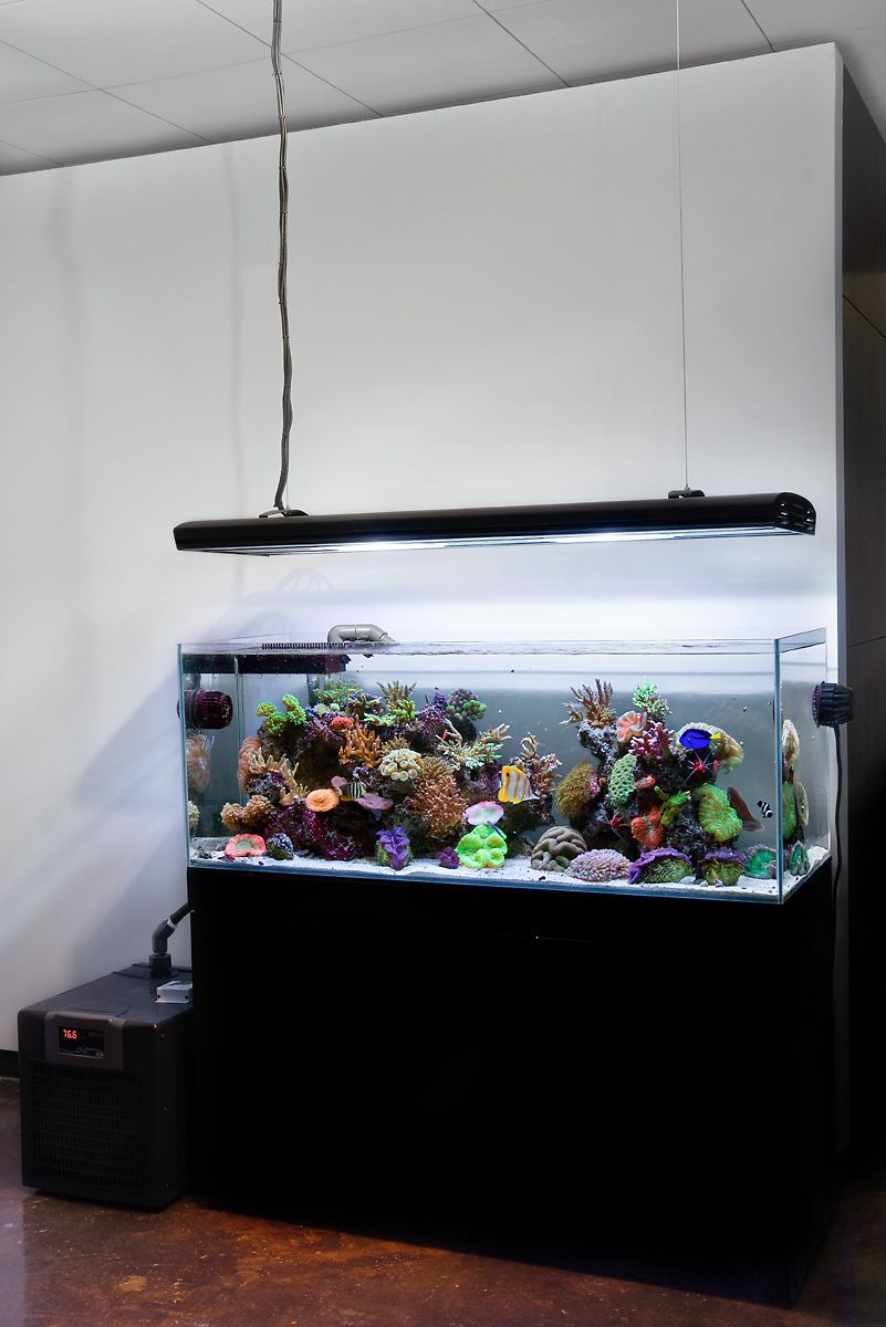Aqua Design Amano 120-P Overflow model Open Top Reef Aquarium
