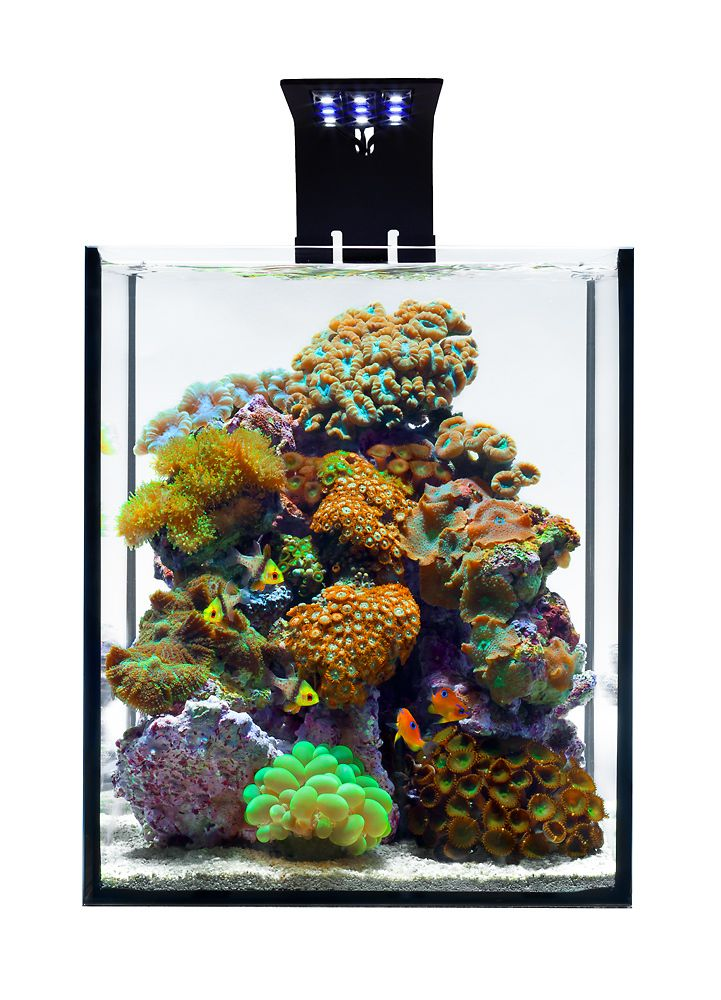 A Five Gallon Live Coral Reef Aquarium