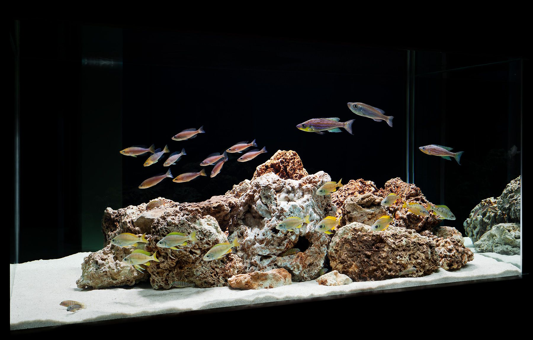 Some fishes of Tanganyika