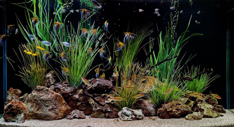 1aquarium_aquariumservice