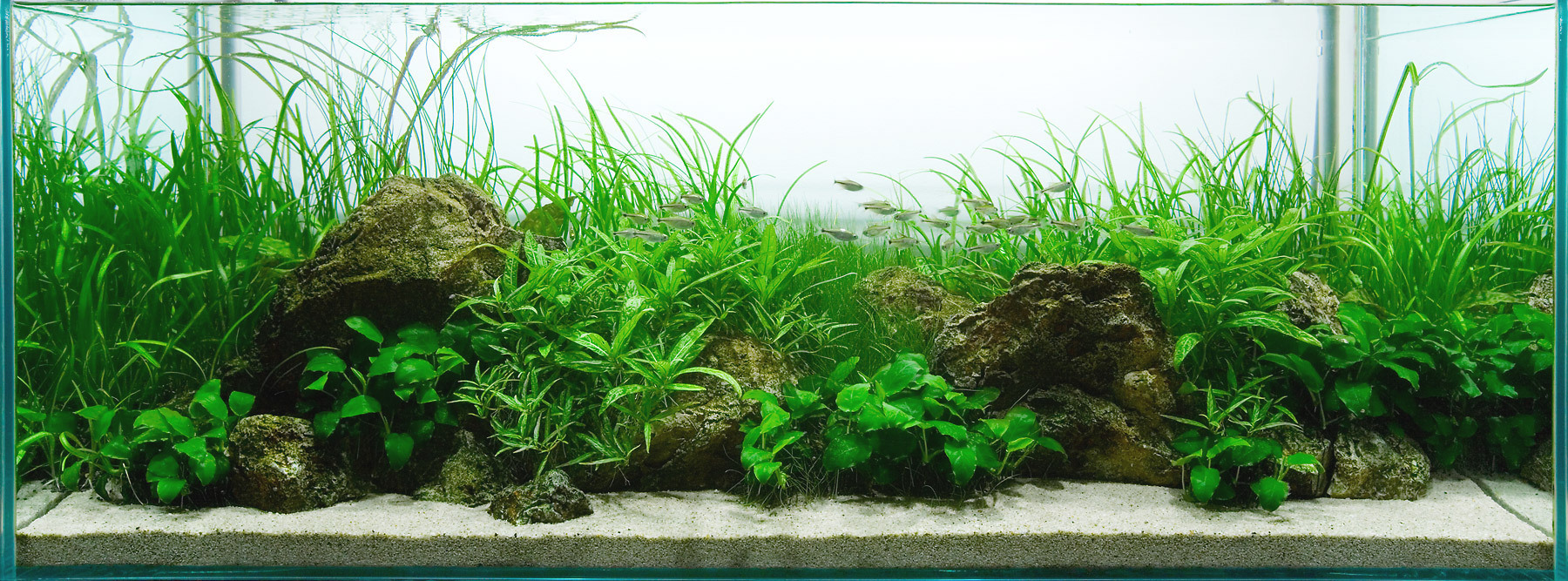 ... A Refreshing Feeling From A Green Aquascape ...