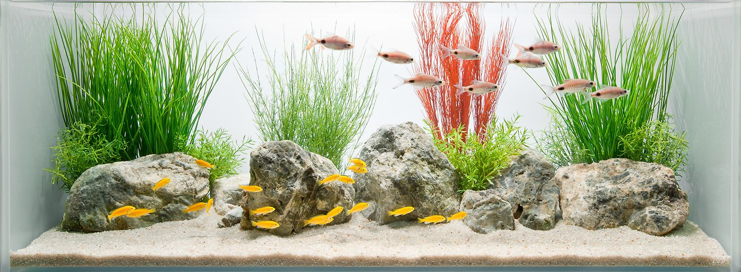 The Soft Effect of a Coceptual Decorative Freshwater Aquarium