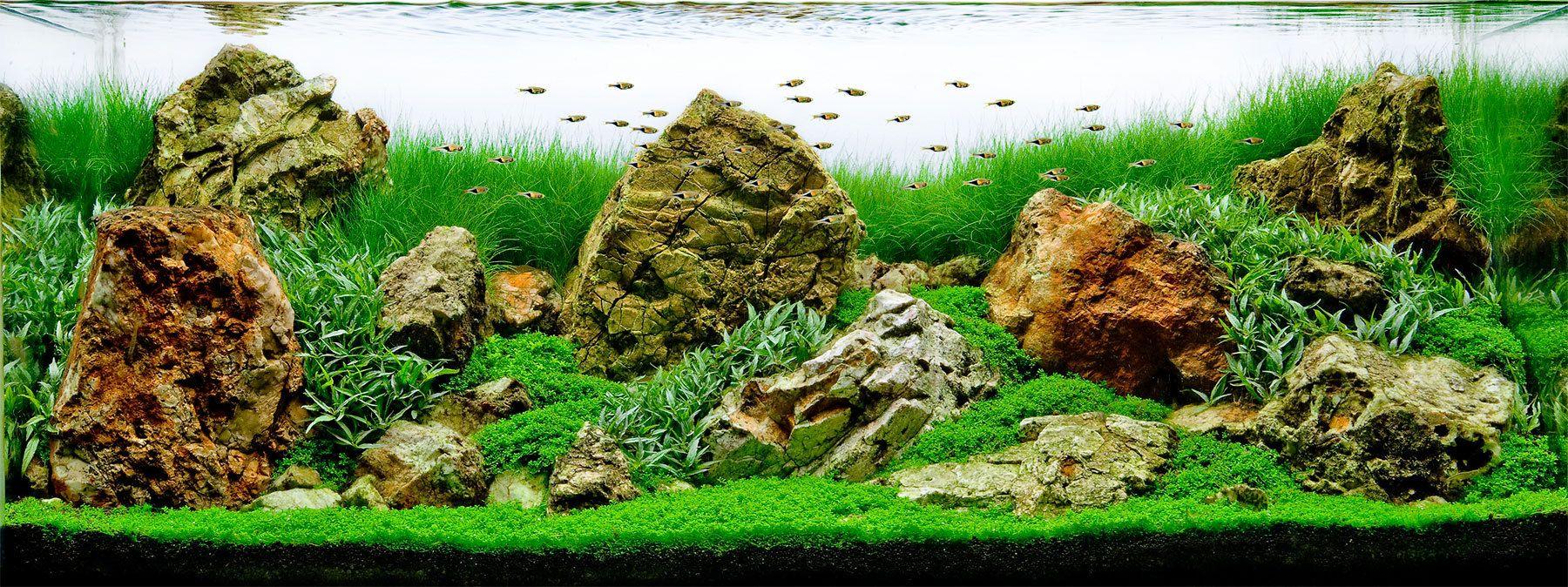An American-style Iwagumi Planted Aquarium